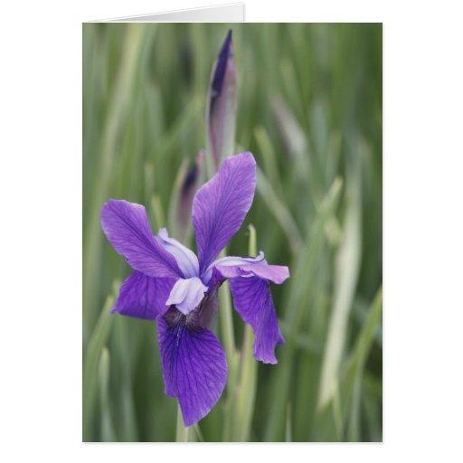 Iris púrpura tarjeta de felicitación