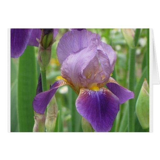 Iris púrpura tarjeta pequeña