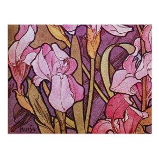Iris púrpura postal