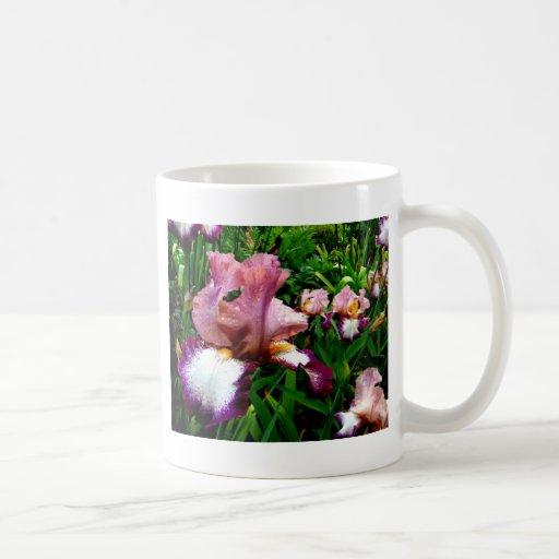 Iris púrpura taza