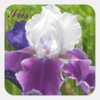 Iris púrpura y blanco - pegatina de Customizble