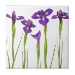 Iris púrpuras aislados en un fondo blanco tejas  ceramicas