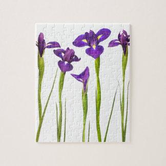 Iris púrpuras aislados en un fondo blanco puzzle