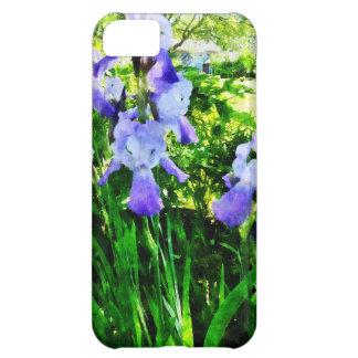 Iris púrpuras en los suburbios