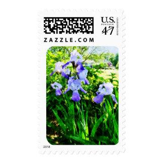 Iris púrpuras en suburbios sellos