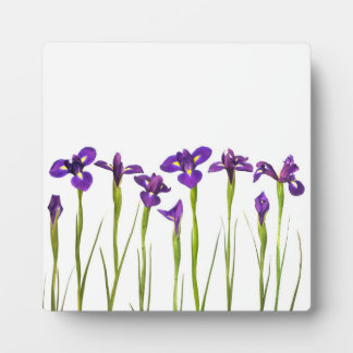 Iris púrpuras - plantilla modificada para requisit placas con foto