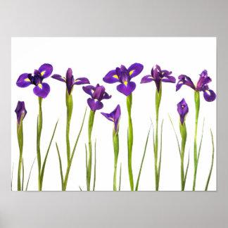 Iris púrpuras - plantilla modificada para requisit póster