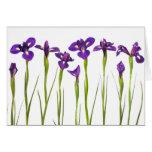 Iris púrpuras - plantilla modificada para requisit felicitación