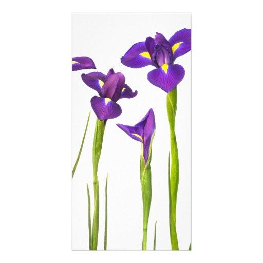 Iris púrpuras - plantilla modificada para requisit tarjetas fotográficas personalizadas