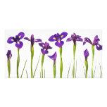 Iris púrpuras - plantilla modificada para requisit tarjetas personales con fotos
