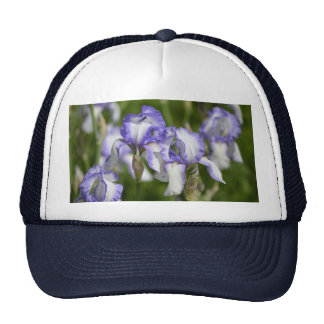 Iris púrpuras y blancos gorro