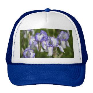 Iris púrpuras y blancos gorro de camionero