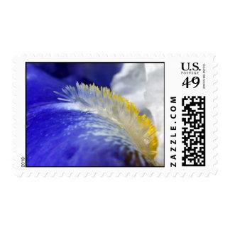 Iris que canta los azules franqueo
