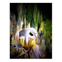 Iris radiance Postcard