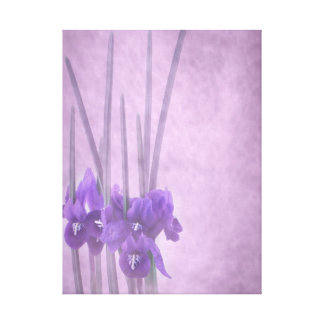 Iris reticulata stretched canvas gallery wrapped canvas
