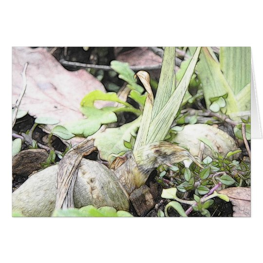 Iris Rhizome With Shoots Card