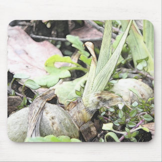 Iris Rhizome With Shoots Mouse Pad