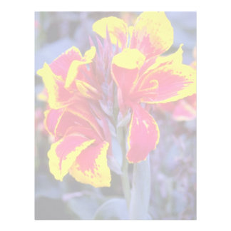 Iris rojo, flores de Australia Membrete A Diseño