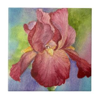 Iris rosado - teja