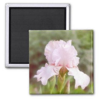Iris rosado - vanidad imán cuadrado