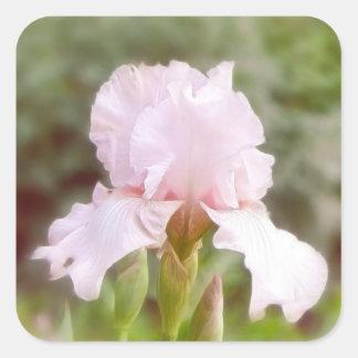 Iris rosado - vanidad pegatina cuadrada