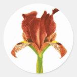 Iris ruso pegatinas redondas