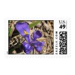 iris salvaje con el insecto del popper sellos
