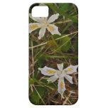 Iris salvaje de Oregon iPhone 5 Carcasas