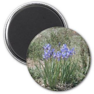Iris salvaje imán redondo 5 cm