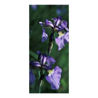Iris salvaje lonas