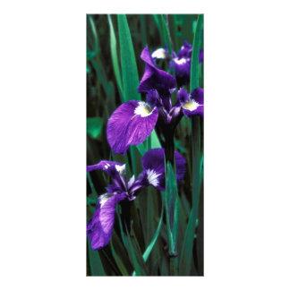 Iris salvaje plantillas de lonas