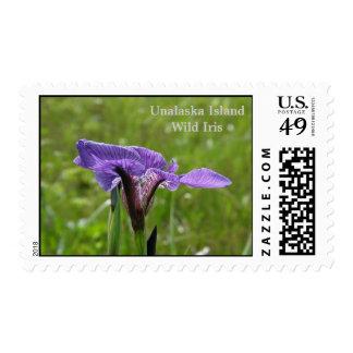 Iris salvaje (setosa del iris) en la isla de franqueo