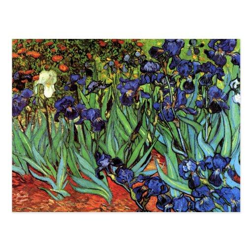 Iris, Santo-Remy, Van Gogh Postal