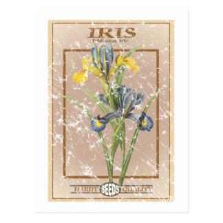 Iris seed packet - distressed postcards