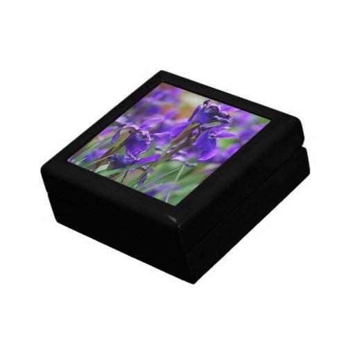 Iris siberiano bonito joyero cuadrado pequeño