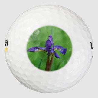 Iris siberiano floreciente