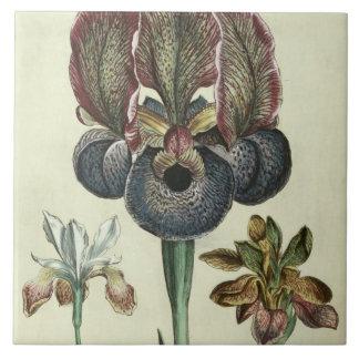 Iris susiana major and Iris bisantina angustifolia Ceramic Tile