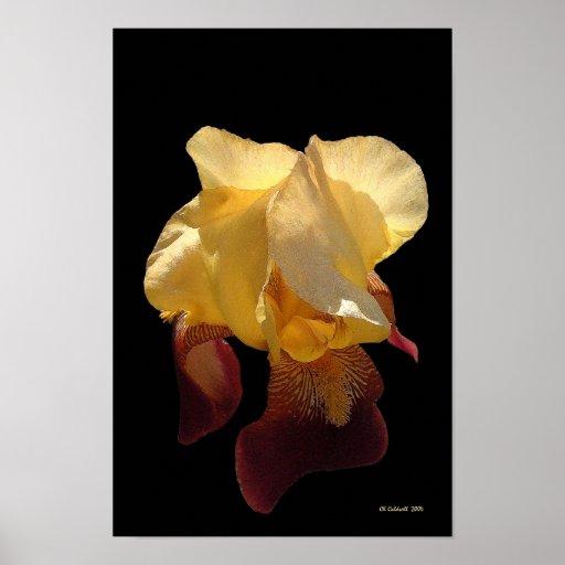 Iris translúcido poster