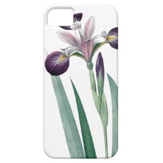 Iris tricolor vintage Redoute illustration iPhone SE/5/5s Case