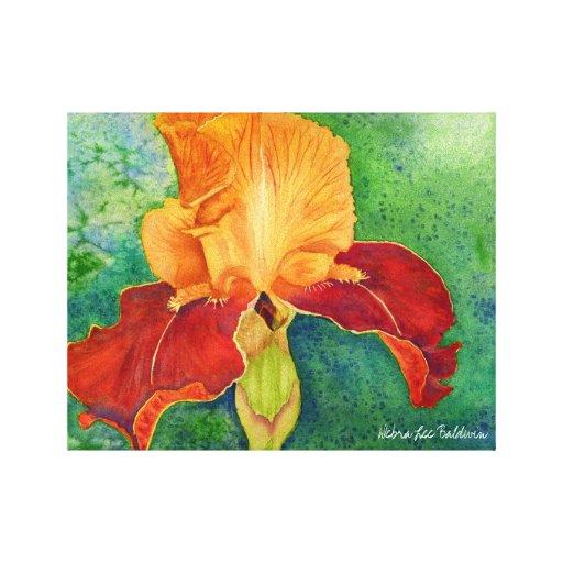 Iris watercolor by Debra Lee Baldwin Canvas Print