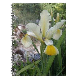 Iris y escarabajo blancos cuadernos