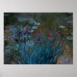 Iris y lirios de agua posters
