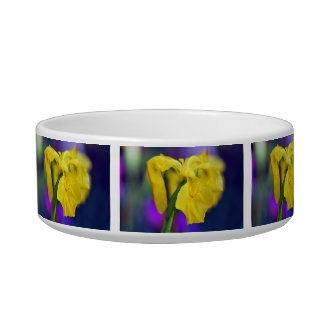 Iris y su significado comedero para mascota
