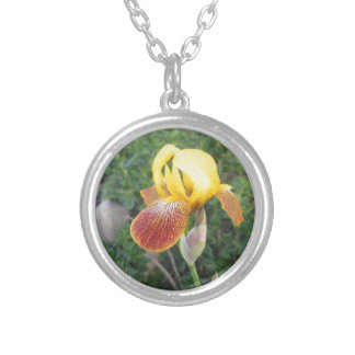 Iris Yellow Bearded Silver Plated Necklace