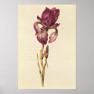 "Irise, de ""La Guirlande de Julia"", c.1642 Posters"