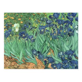 Irises, 1889 postcard