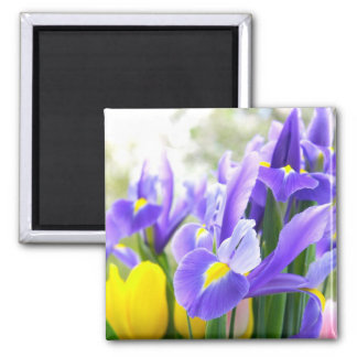 Irises And Tulips Spring Flowers 2 Inch Square Magnet