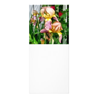 Irises By Picket Fence Rack Card
