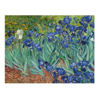 Irises by Van Gogh Postcards