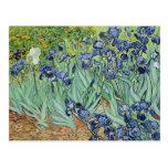 Irises by Vincent van Gogh Post Cards